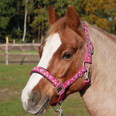 Ohlávka Busse Flying Pony Cob růžová