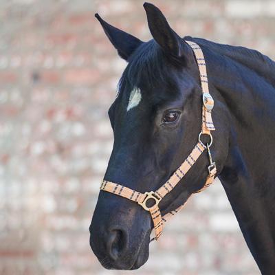 Ohlávka Waldhausen Check Pony meruňková