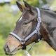 Ohlávka Busse Einhorn Pony modrá