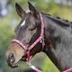 Ohlávka Busse Einhorn Pony růžová