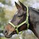 Ohlávka Busse Einhorn Pony zelená